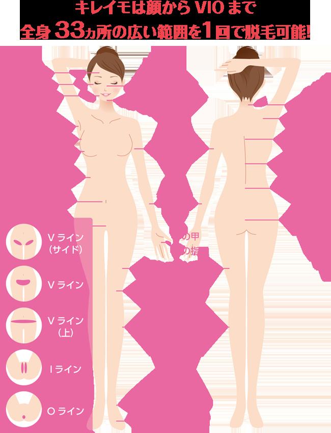 キレイモは顔からVIOまで全身33ヵ所の広い範囲を1回で脱毛可能!